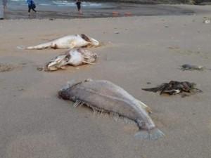 Sau cá chết, biển Thừa Thiên Huế đạt ngưỡng an toàn