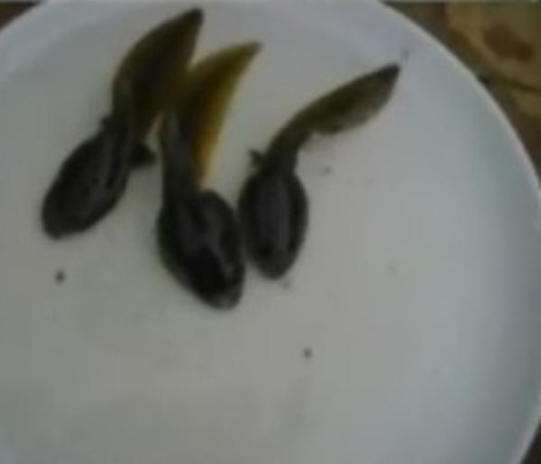 Những dị nhân ăn tươi nuốt sống động vật - 8