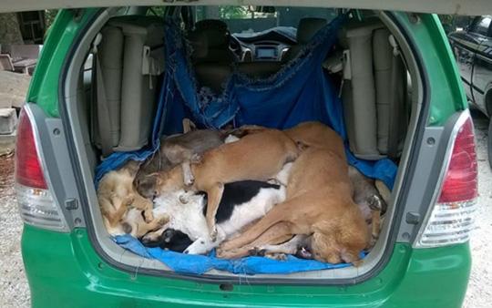 """Truy tìm 2 """"cẩu tặc"""" thuê taxi chở 16 con chó trộm - 1"""