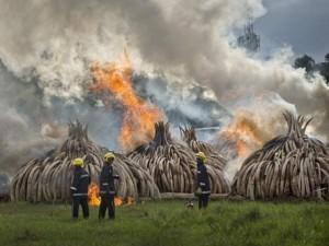 Ảnh: Kenya tẩm xăng đốt 100 tấn ngà voi trị giá 2.200 tỉ