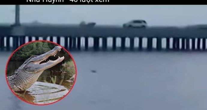 """Đã bắt được cá sấu """"khủng"""" trên sông Soài Rạp - 1"""