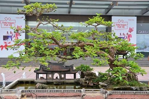 Suýt xoa dàn cây ăn quả bonsai tuyệt đẹp ở Thủ đô - 10