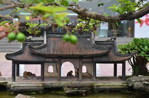Suýt xoa dàn cây ăn quả bonsai tuyệt đẹp ở Thủ đô - 11