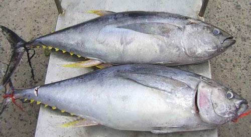 15 món ăn hải sản ngon nổi tiếng không nên bỏ qua - 6