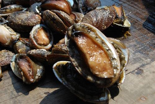 15 món ăn hải sản ngon nổi tiếng không nên bỏ qua - 7
