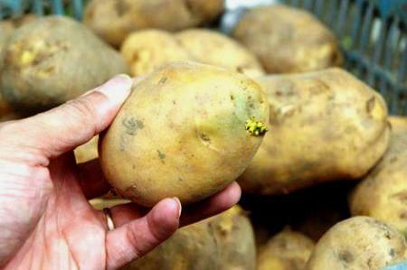 Loại rau quả có thể gây tử vong nếu ăn sai cách - 1