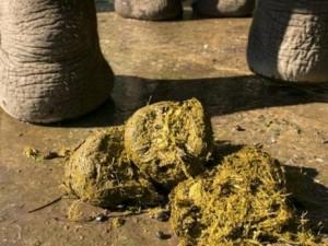 Thoát nghèo, trở nên giàu có nhờ... phân voi