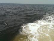 Tin tức trong ngày - Hà Tĩnh: Ngư dân phát hiện dải nước biển màu đỏ sẫm
