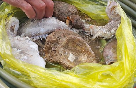 Rạn san hô chết khô gần bờ biển Quảng Bình - 2