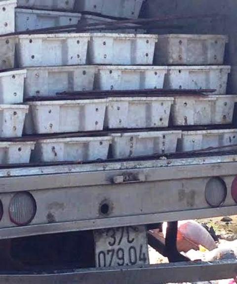 3 tấn cá đốm đang phân hủy được đưa đi làm nước mắm - 1