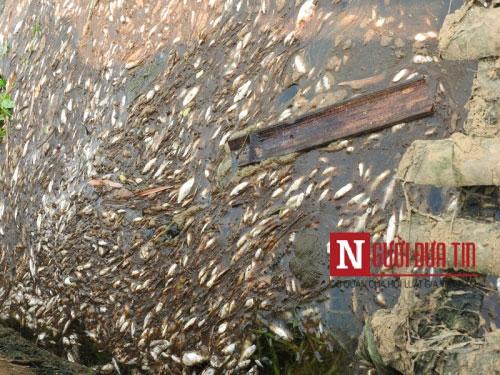 Nhà máy đường thừa nhận xả thải khiến cá chết trắng sông - 4