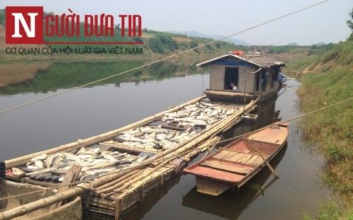 Nhà máy đường thừa nhận xả thải khiến cá chết trắng sông - 6