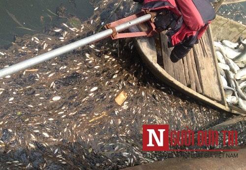 Nhà máy đường thừa nhận xả thải khiến cá chết trắng sông - 7