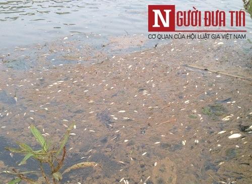 Nhà máy đường thừa nhận xả thải khiến cá chết trắng sông - 9