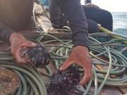 Tin tức trong ngày - Quảng Bình: Rạn san hô gần bờ đang chết