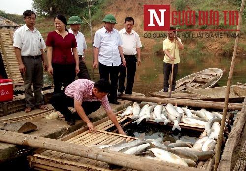 Thanh Hóa: Sẽ khởi tố hình sự vụ cá chết trắng sông - 1