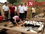 Tin tức trong ngày - Thanh Hóa: Sẽ khởi tố hình sự vụ cá chết trắng sông