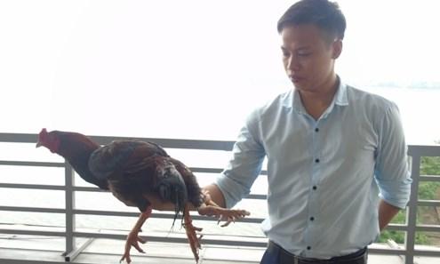 Ga choi 4 chan o Ha Noi, gà chọi có 4 chân, gà có 4 chân - 3