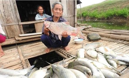 Thanh Hóa báo cáo Thủ tướng vụ cá chết trên sông - 1