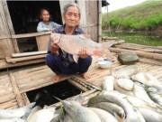 Tin tức trong ngày - Thanh Hóa báo cáo Thủ tướng vụ cá chết trên sông