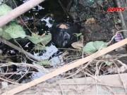 An ninh Xã hội - Hành trình phá án: Bí ẩn xác chết bị vùi dưới đống rác (P.2)
