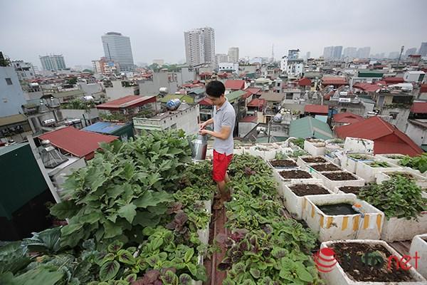 Độc đáo vườn-ao-chuồng giữa Thủ đô của chàng trai 9X - 1