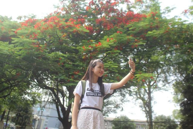 Ngẩn ngơ ngắm hoa phượng nở rực trời Hà Nội đầu hè - 15