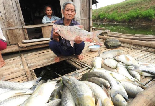 Cá chết hàng loạt trên sông: Nhà máy đền bù 1,4 tỉ đồng - 1