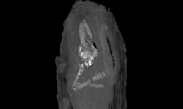 Phát hiện xác ướp thai nhi trong quan tài Ai Cập cổ đại - 3