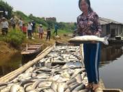 Tin tức trong ngày - Cá chết hàng loạt trên sông: Nhà máy đền bù 1,4 tỉ đồng