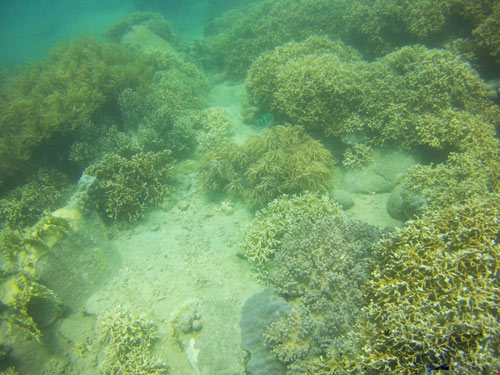 Ngỡ ngàng ngắm rạn san hô tuyệt đẹp ở đảo Hòn Mun - 15