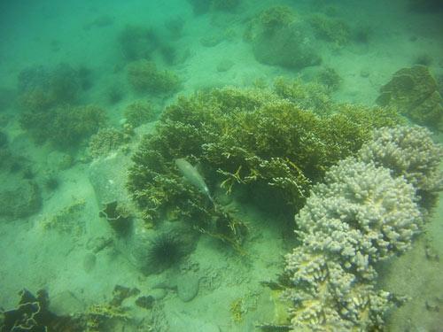 Ngỡ ngàng ngắm rạn san hô tuyệt đẹp ở đảo Hòn Mun - 14