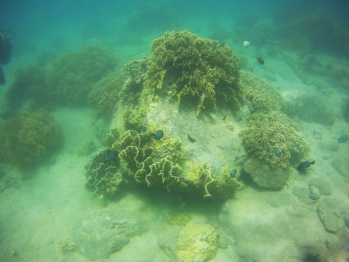 Ngỡ ngàng ngắm rạn san hô tuyệt đẹp ở đảo Hòn Mun - 13