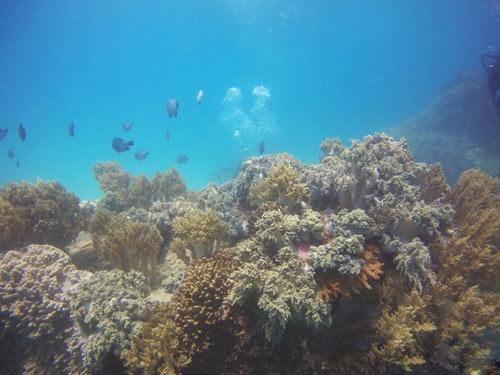 Ngỡ ngàng ngắm rạn san hô tuyệt đẹp ở đảo Hòn Mun - 1