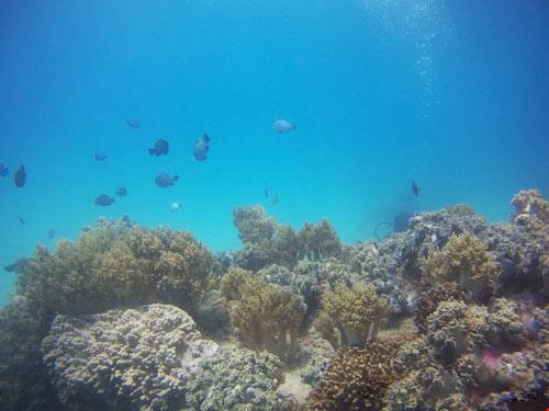 Ngỡ ngàng ngắm rạn san hô tuyệt đẹp ở đảo Hòn Mun - 5