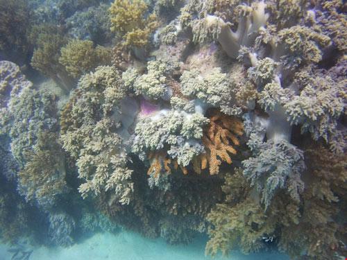 Ngỡ ngàng ngắm rạn san hô tuyệt đẹp ở đảo Hòn Mun - 4