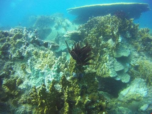 Ngỡ ngàng ngắm rạn san hô tuyệt đẹp ở đảo Hòn Mun - 10