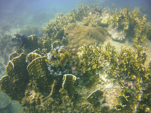 Ngỡ ngàng ngắm rạn san hô tuyệt đẹp ở đảo Hòn Mun - 11