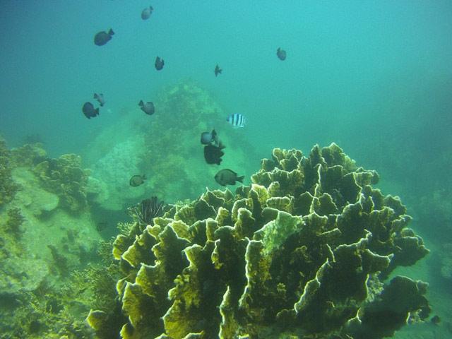 Ngỡ ngàng ngắm rạn san hô tuyệt đẹp ở đảo Hòn Mun - 6