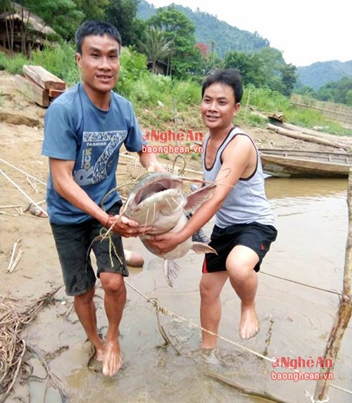 Cần thủ Nghệ An câu được cá khổng lồ, nặng 25kg - 2