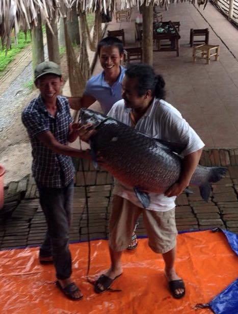Cần thủ câu được cá khủng, chủ hồ ngỏ ý đổi 1 con bê - 3