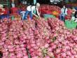 Úc xem xét nhập khẩu thanh long Việt Nam