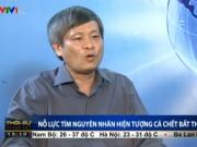 Tin tức trong ngày - Thứ trưởng Bộ KH&CN trả lời nguyên nhân cá chết