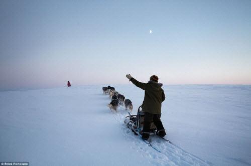 Cô gái bỏ thành phố để sống cùng 85 con chó kéo ở Bắc cực - 3