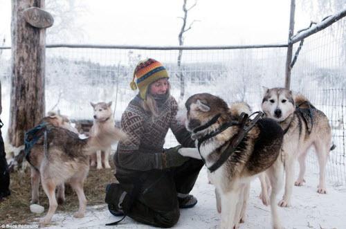 Cô gái bỏ thành phố để sống cùng 85 con chó kéo ở Bắc cực - 5