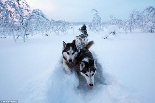 Cô gái bỏ thành phố để sống cùng 85 con chó kéo ở Bắc cực - 6