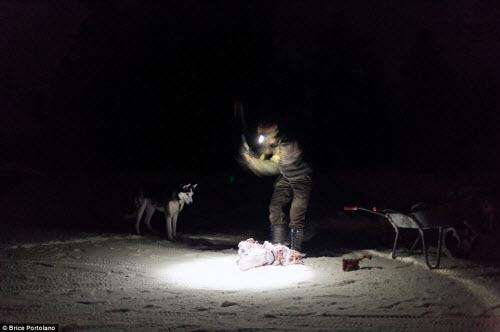 Cô gái bỏ thành phố để sống cùng 85 con chó kéo ở Bắc cực - 12