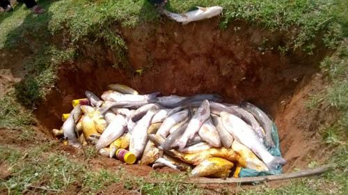 Cá nuôi trên sông Bưởi tiếp tục chết bất thường - 2