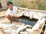 """Tin tức trong ngày - Vụ ô nhiễm sông Bưởi: Phạt 4 tỉ, buộc """"rửa"""" sạch ô nhiễm"""