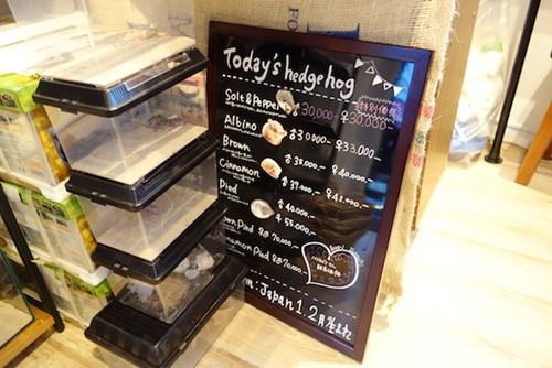 Bên trong quán cà phê nhím độc đáo ở Nhật Bản - 15